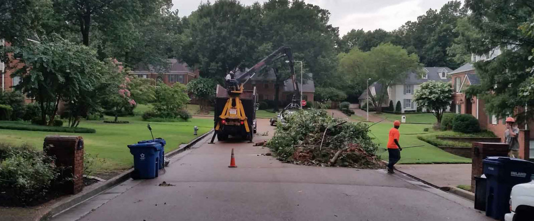 Trees being removed in Drummonds, TN